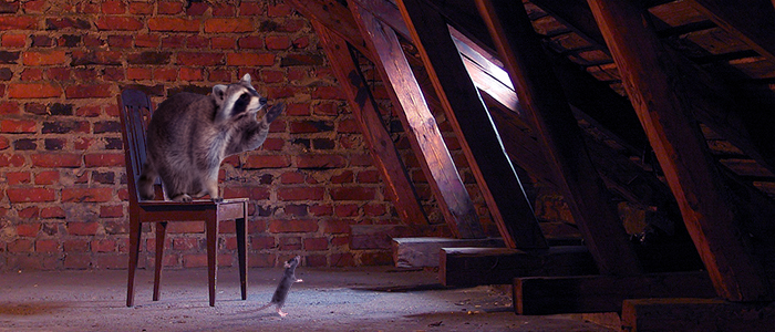 5 Humane Ways To Keep Animals Out Of Your Attic Critter