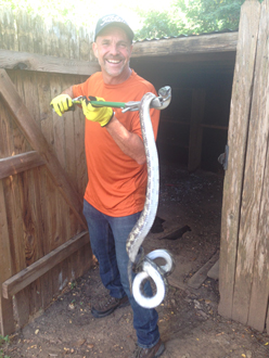 Mike Dillon, of Critter Ridder Texas, holding a captured snake.
