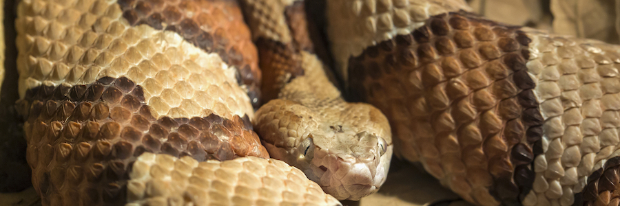 Critter Ridder Featured On Fox 7 Austin For Snake Sightings