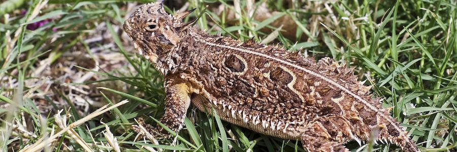 4 Of The Weirdest Critters In Texas Critter Ridder Texas