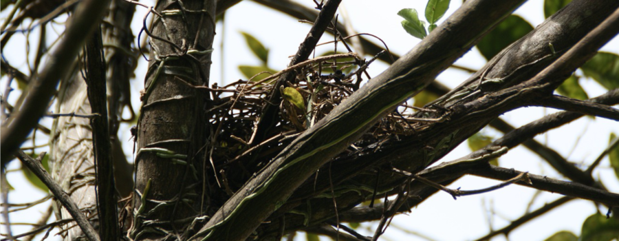 Determining The Right Time For Bird Nest Removal